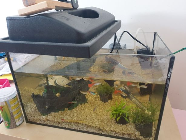 Akwarium + rybki