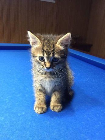 Котенок ищет новый дом!