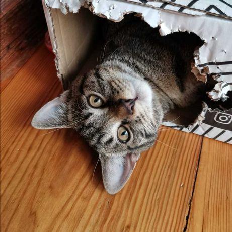 Zaginął kot Nemo!!
