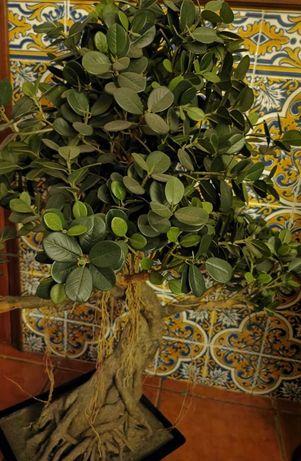 Bonsai de tronco natural e folhas artificiais,em bom estado.