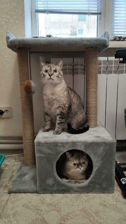 Домик для котиков .когтеточка.