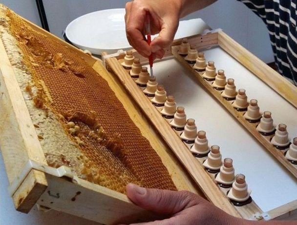 Пчеломатки Карника - Скленар