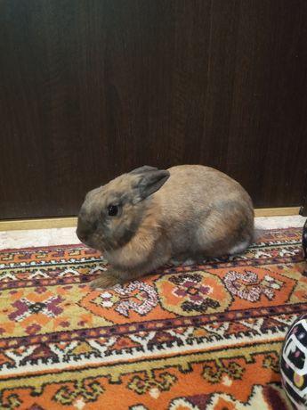 Кролик девочка декоративная
