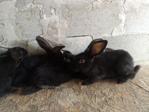Розпродаж кролики