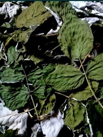 Продам листья малины