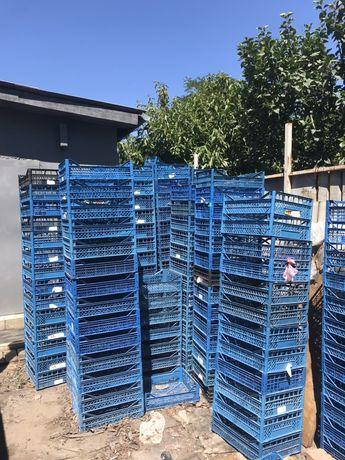 Пластмассовые ящики под овощи