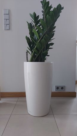 Lechuza biała doniczka 40x75cm