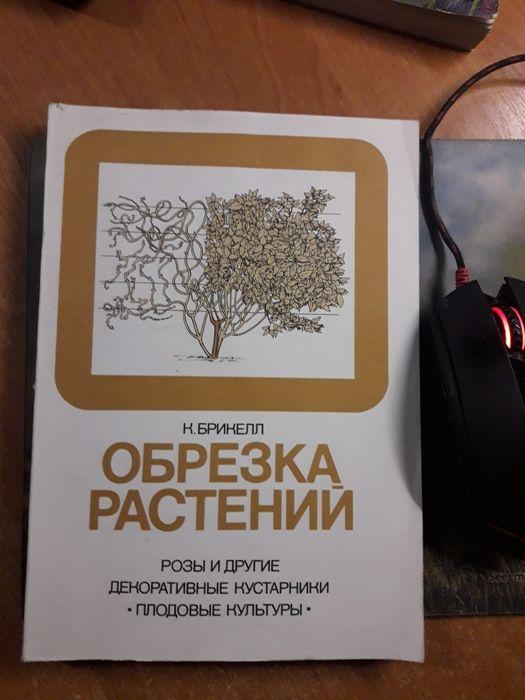 к.брикелл обрезка растений Киев - изображение 1