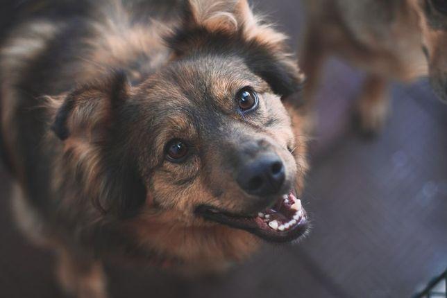 Лёля - нежная добрая собака, хорошая охранница