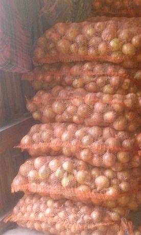Sprzedam cebulę suchą
