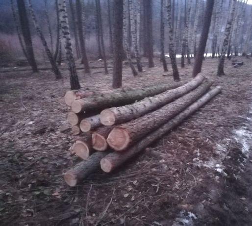 Modrzew drewno na boazerie sztachety słupki i inne 30 sztuk