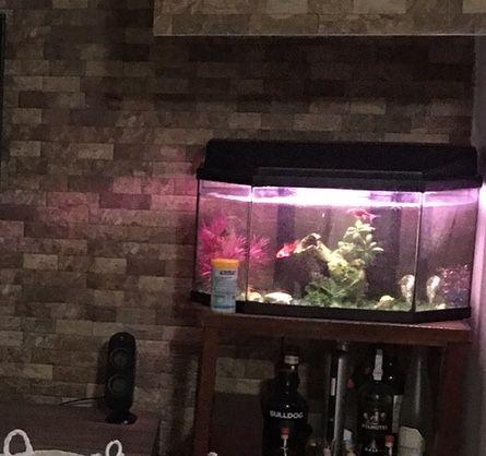 Aquário para peixes de agua fria