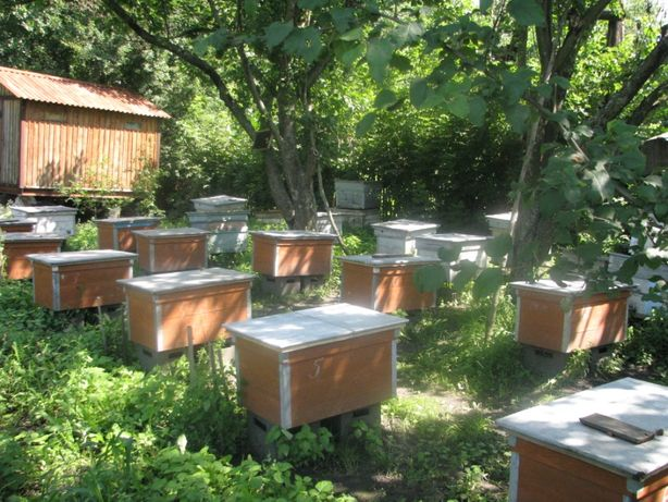 ПАСЕКА (домик, ульи, пчелосемьи, кормушки, рамки, медогонка)