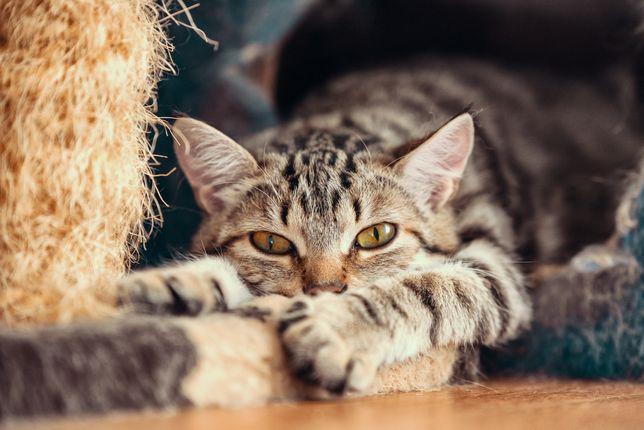 Котёнок-подросток в добрые руки