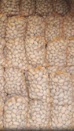 Ziemniaki pakowane w worki 15 kg