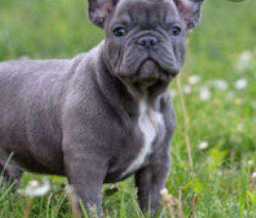 Помогу с покупкой щенка любой породы