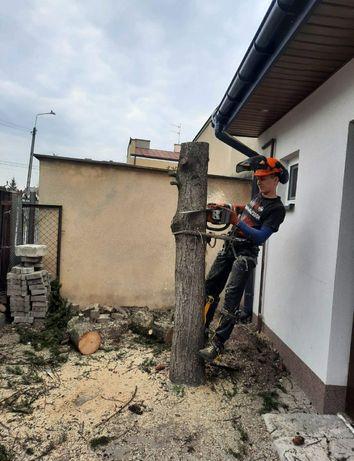Wycinka drzew alpinistycznie czyszczenie działek mulczowanie