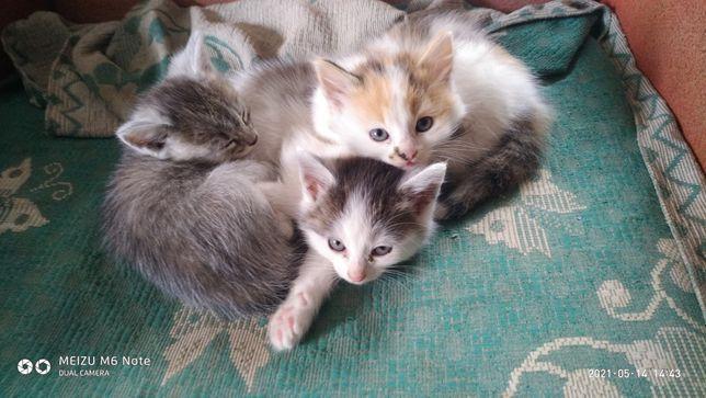 Віддамо в хороші руки кошенята