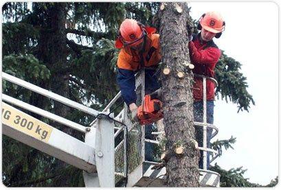Wycinka drzew trudnych