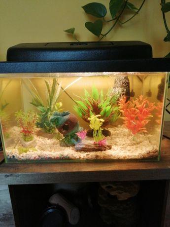 Akwarium 30l z akcesoriami i rybkami