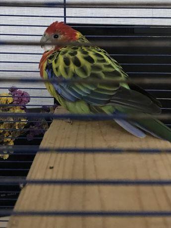 Нашли попугая