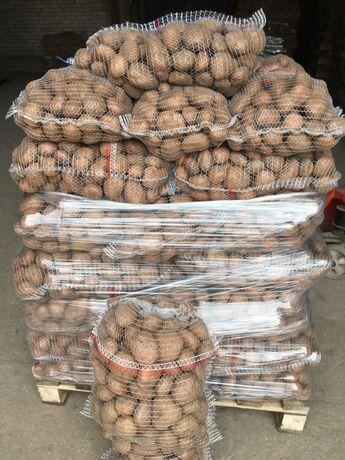 Ziemniaki jadalne Irga