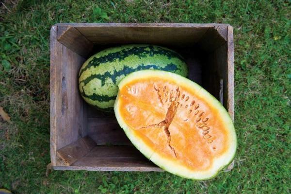 nasiona arbuza Arbuz Orangeglo pomarańczowy w środku ze Stanów USA