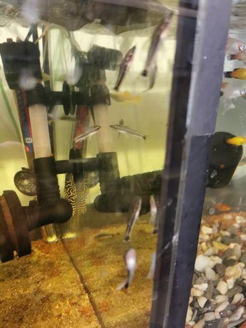 Otoski przydatne w akwarium
