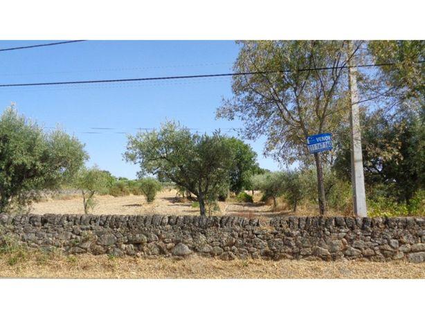 Terreno Rústico na entrada da aldeia São Miguel de Acha