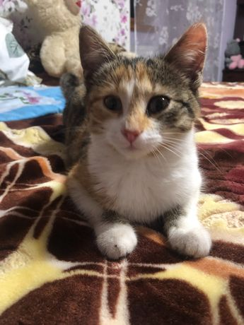 Маленька кішечка шукає господарів