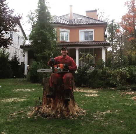Срез Дерева, удалить дерево, аварийное дерево, сухая ветка, дрова