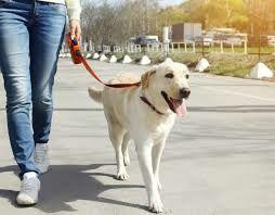 Выгул собак любой породы