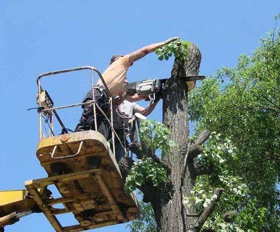 Спил корчевание деревьев, Выравнивание,уборка,расчистка участка