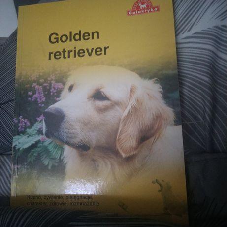 Golden retriever.Okazja
