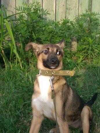 Бесплатно: небольшая собачка Даша ,6 мес, стерилизована