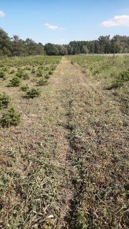 Koszenie trawy ,wykaszanie nieużytków,wycinka krzaków ,rębak do gałęzi