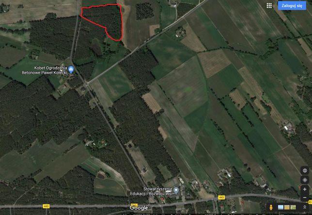 Las Sosnowy. Białobłoty