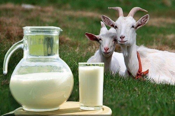 Продам коз, козы