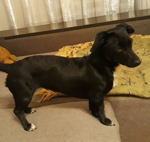 Найдена собачка, ул.Лермонтова(размером с кошку)
