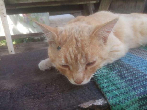 Приговорённый на усыпление кот ищет семью, 8 лет