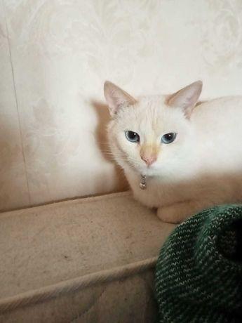 кошка белая отдам в хорошие руки бесплатно