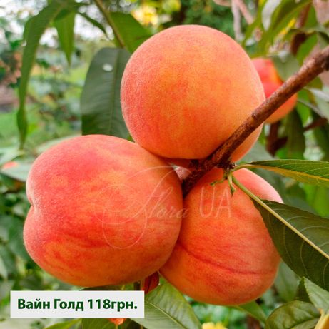 Саженцы персика Вайн Голд с питомника, много других сортов плодовых