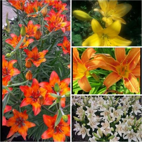 Різні рослини та квіти