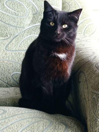 Черный кот ищет дом, суров и строг, возраст 1 год