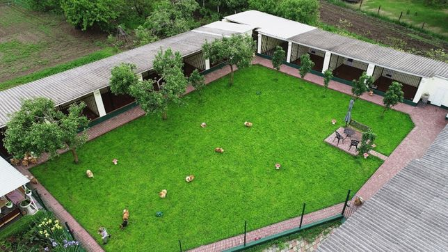 Гостиница для собак Полтава