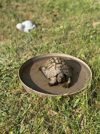 Zaginął żółw