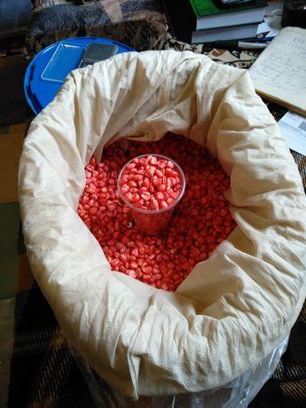 Семена. Кукуруза кормовая. Крупная. Протравлена. Домашняя.
