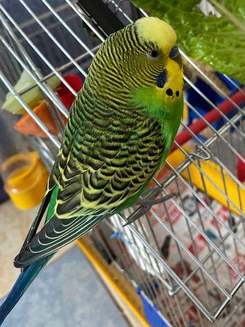 Потерялся зеленый попугайчик