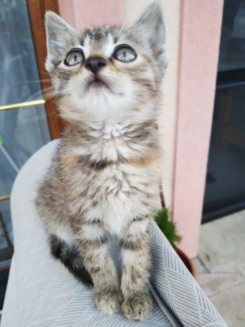 Kitku kotki małe kocięta