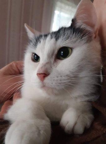 Кішечка шукає родину